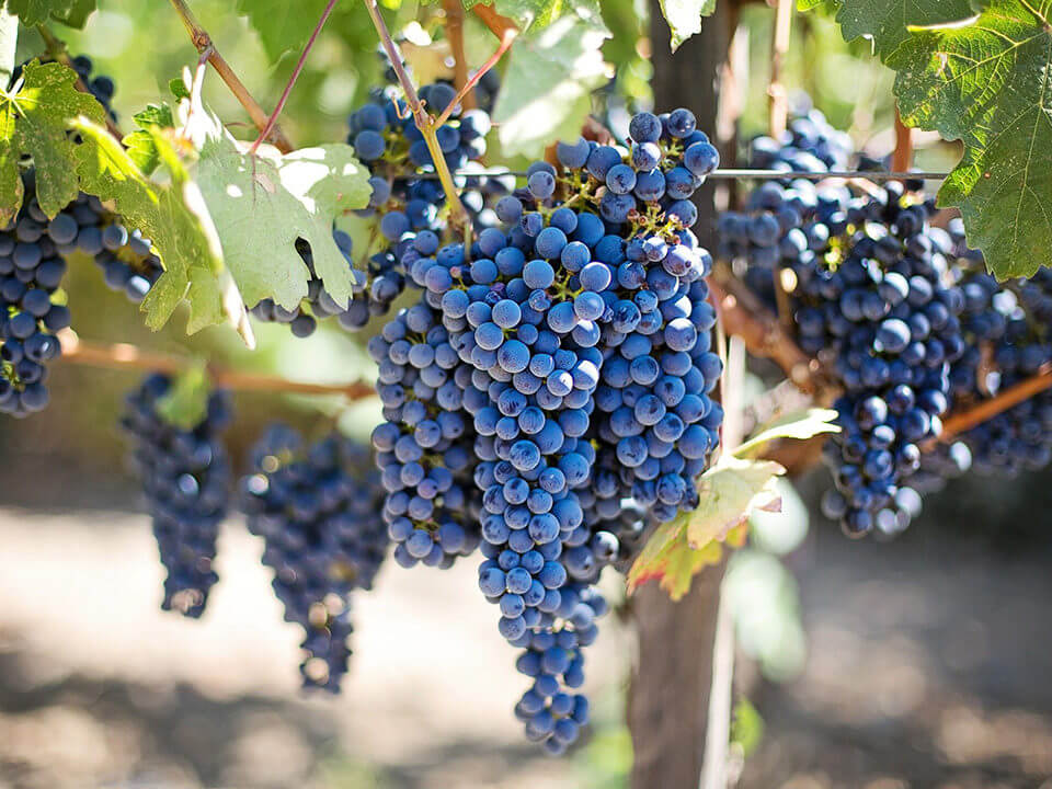 Wineandco 1